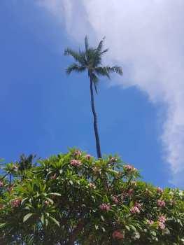 Kaanapali Beach18